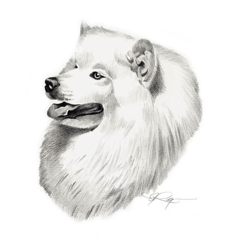 Samoyed Dog Pencil Drawing Art Print By Artist Dj Rogers Etsy