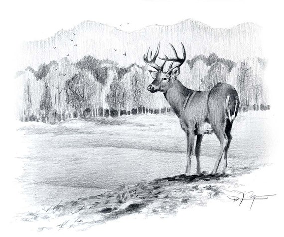Whitetail Buck Pencil Drawing Art Print By Artist Dj Rogers Etsy