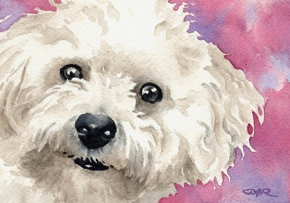 BICHON FRISE Art Print by Watercolor Artist DJ Rogers