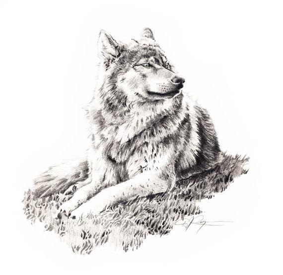 Loup Couche Vers Le Bas Lart Du Dessin Au Crayon Impression Etsy