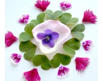 Rose, Violet, Oxalis, Dianthus Essence