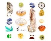 Maine beachcombing photograph - birch bark, crab, shell, mussel, sea glass, seaglass, sea urchin, seaweed