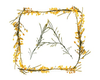 Seaweed Alphabet (square) - individual letters - fine art photographs