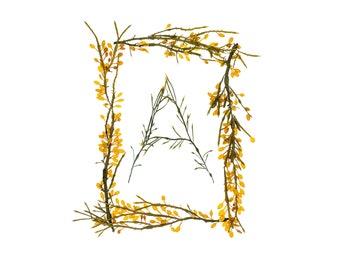 Seaweed Alphabet (rectangular) - individual letters - fine art photographs