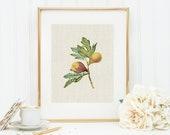 Figs Art Print 8x10 5x7 4x6 Canvas Print STAR MS