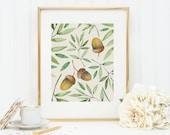Three Acorns Art Print 8x10 5x7 4x6 Canvas Print STAR MS