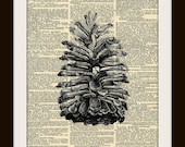 PINE CONE Art Print on Vintage Dictionary Page 8x10