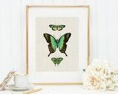 Butterflies in Green Art Print 8x10 5x7 4x6 Canvas Print STAR MS
