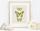 Butterflies in Yellow Art Print 8x10 5x7 4x6 Canvas Print STAR MS