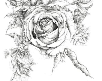 Fancy Roses Drawing - 8x10 print