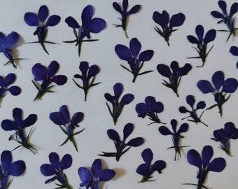 Dried Pressed Flowers for Crafting - Blue Lobelia