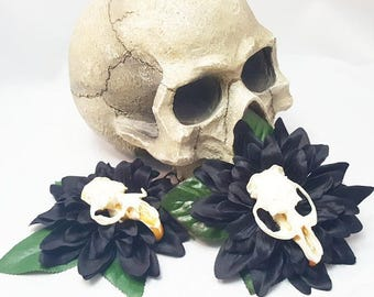 Muskrat Skull Bone Black Dahlia Flower Clip Hair Floral Torture Couture Gothic Goth Pinup Lolita Taxidermy bones animal Fascinator
