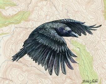 Flying Crow art on topography map, Archival print, wildlife illustration, bird print, wall art, crow illustration, vintage style painting