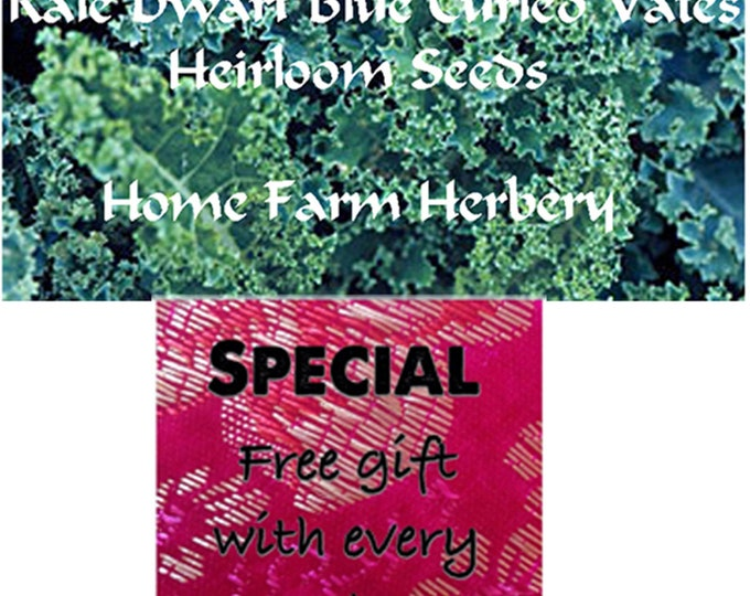Kale Dwarf Blue Curled Vates Heirloom Seeds, Order now and get a free gift!