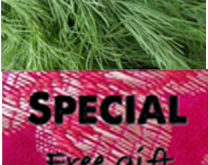 Order Dill, Bouquet Heirloom Herbs Seeds now, special sale, reduced price, and get a free gift.