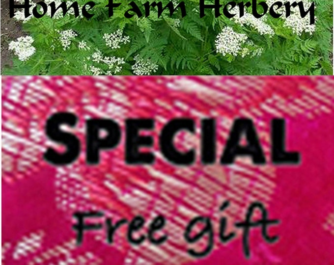 Anise Hyssop, Medicinal Herb Seeds (Non-Hybrid/Non-GMO) special sale, reduced price, a free gift included.