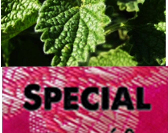 Order Horehound, Medicinal Herb Heirloom Seeds now, special sale, reduced price, a free gift.