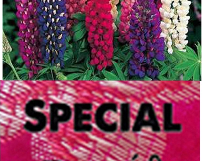 Order Lupines Russell Wildflower Heirloom Seeds now and get a free gift.