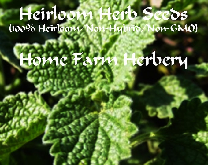 Horehound, Herb Heirloom Seeds all natural, chemical free from Home Farm Herbery.