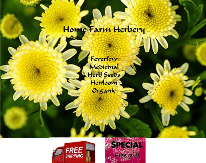 Order Feverfew Herb Seeds now, special sale, reduced price, a free gift.