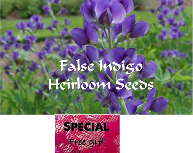 Order the best False Indigo Heirloom Perennial Seeds now, Free gift, B3G1F
