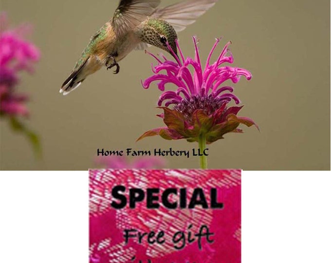 Make a Place in your Garden for Bee Balm Heirloom Seeds, Order now, FREE gift included.
