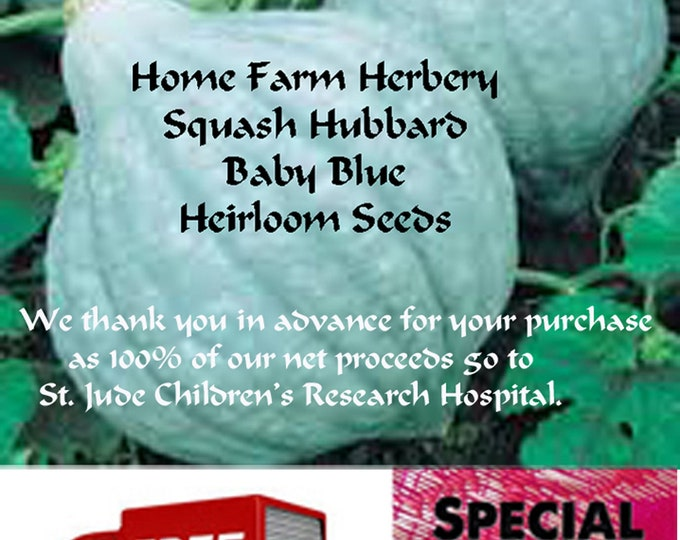 Order Squash Hubbard Baby Blue Heirloom seeds now, Special sale, reduced price, FREE shipping & a FREE gift.