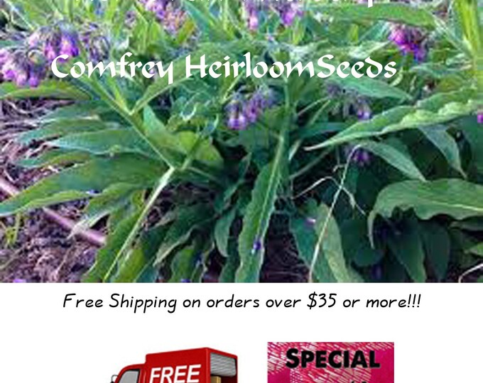 Order Comfrey Seeds now, special sale, reduced price, a free gift, FREE shipping on minimum orders!