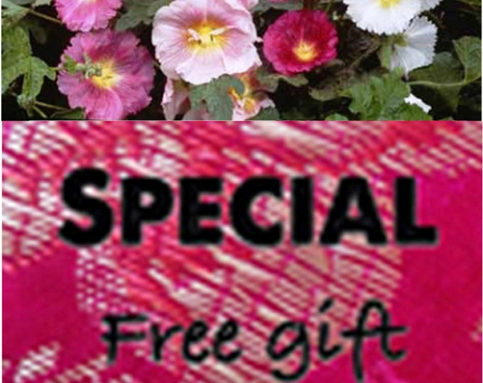 Plant Hollyhock Heirloom Seeds Single Mix Mixed in your garden! Order now & get a free gift
