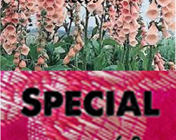 Order Foxglove Apricot Heirloom NON GMO seeds now, special sale, reduced price & a free gift.