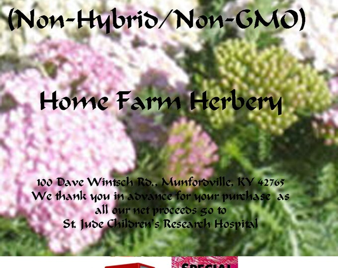 Order Yarrow, Herb Seeds Medicinal now, special sale, reduced price, get a free gift.