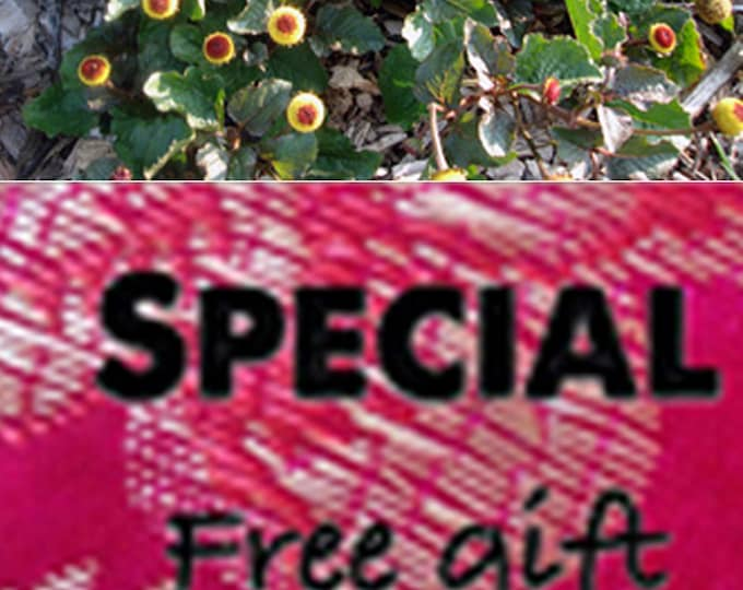 Order Toothache Plant Heirloom Seeds now, special sale, reduced price, a free gift,