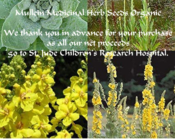 Order our Best Mullein Heirloom Seeds & get a FREE gift, FREE shipping, now,