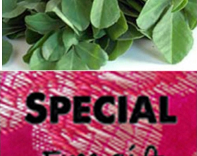 Order Fenugreek, Heirloom Herb Seeds now, FREE gift