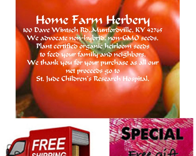 Order Tomato, Beefsteak Ponderosa Red Heirloom Seeds now, Special sale, reduced price, FREE shipping & a free gift