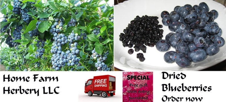 Dried Blueberries Chemical FREE Healthy Delicious Order image 0