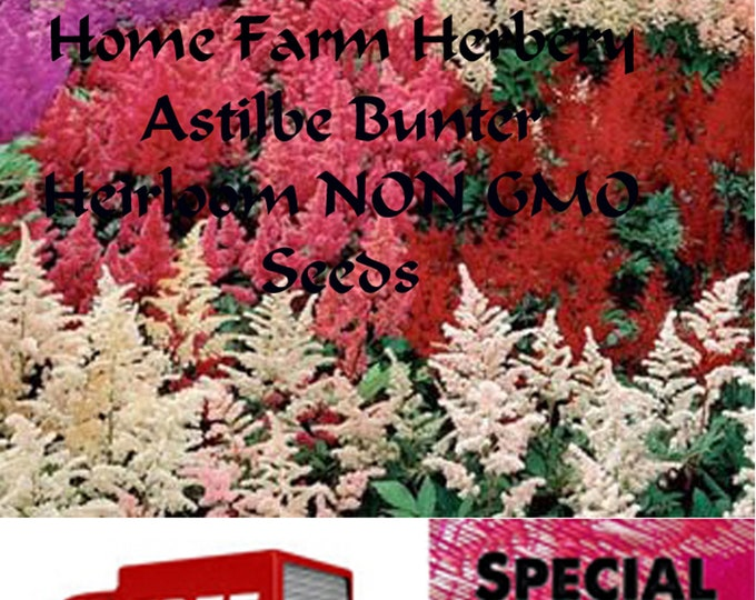 Order the best Astilbe Bunter Heirloom NON GMO Seeds now and get a free gift and free shipping.