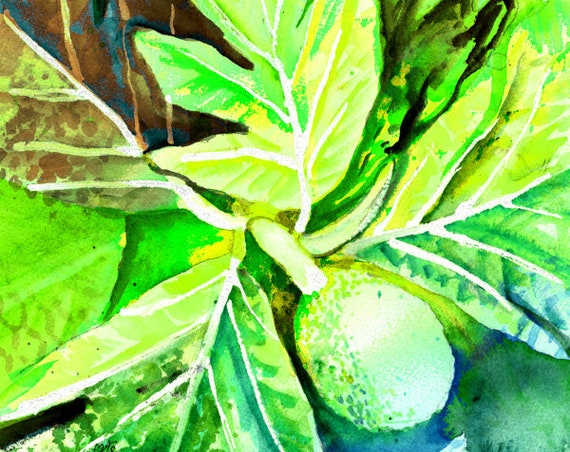 breadfruit art print,  hawaiian ulu, hawaii artwork, kauai decor, breadfruit design, hawaiian art, hawaii maui oahu, bread fruit