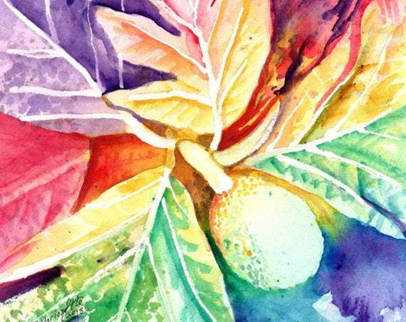 Breadfruit Original Watercolor Painting from Kauai, Hawaii by Marionette Taboniar