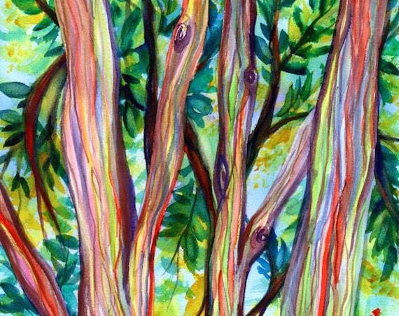 Rainbow Eucalyptus Tree Watercolor Painting Hawaiian Trees Kauai Art Hawaii Wall Decor
