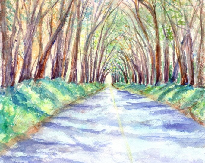 kauai tree tunnel print hawaiian paintings tunnel of trees original watercolor kauai artist kauaiartist giclee print maluhia road