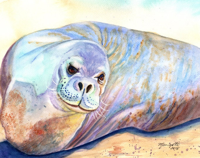 Kauai Monk Seal Original Watercolor, Poipu monk seal, Hawaii seal art, Hawaiian monk seals