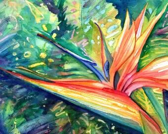 Bird of Paradise, Heliconia Paintings, Bird of Paradise Art, Tropical Flower Paintings, Hawaii Art, Hawaiian Decor, Hawaiian flowers
