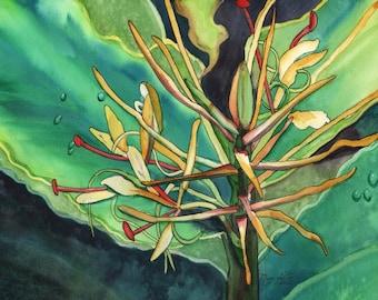 Kahili Ginger, tropical Print, Kauai art, Hawaii art, Ginger Plant, Kokee, Waimea Canyon, Hawaiian painting, Hedychium gardnerianum, flowers