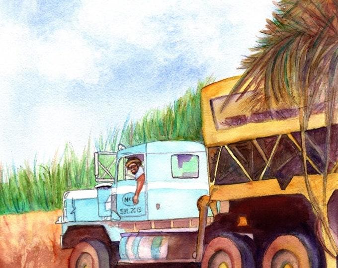 Sugar Cane Harvesting, Hawaiian sugar industry, Kauai McBryde Sugar Mill, Sugar trucks, Haul Cane truck driver, Hawaiian sugar plantation