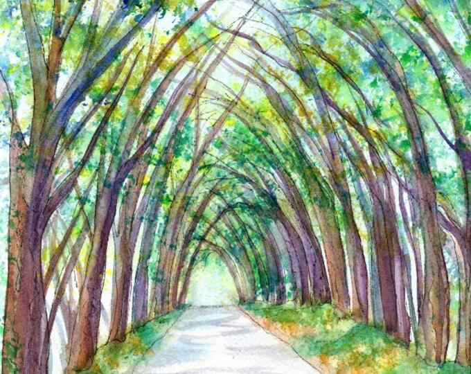 Kauai Tree Tunnel Original Watercolor Painting from Kauai, Hawaii by Marionette Taboniar