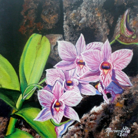 orchid art print, tropical flower art, lava rock orchid, Hawaii painting, Hawaii art, Lava rocks, orchid growers