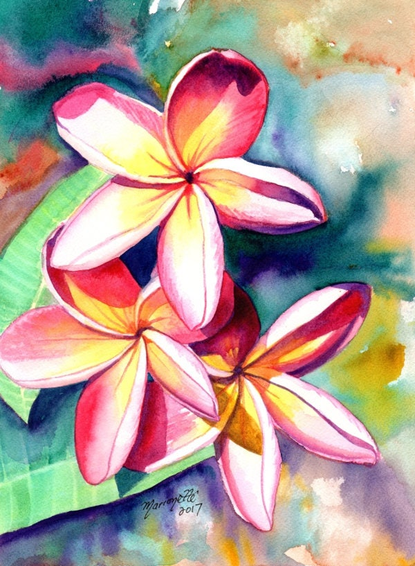 plumeria watercolors hawaiian flowers tropical flowers frangipani