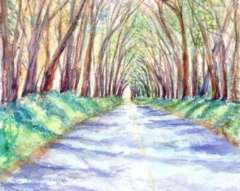 kauai tree tunnel print hawaiian paintings tunnel of trees original watercolor kauai artist kauaiartist giclee print maluhia road
