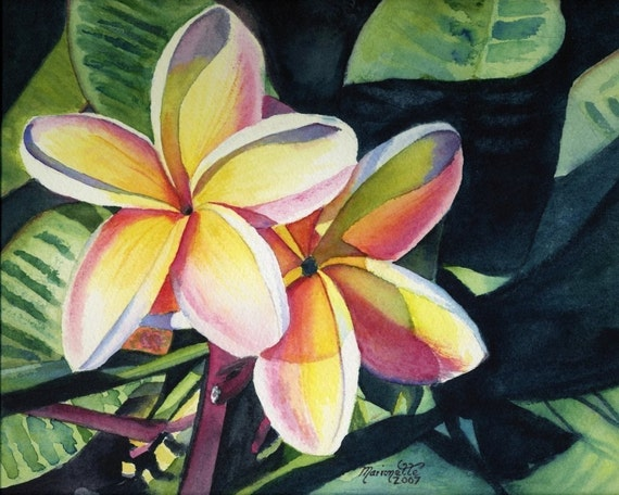plumeria art,  tropical flowers, plumeria prints, hawaiian art, kauai paintings, hawaii print, frangipani, Hawaii artwork, kauai art